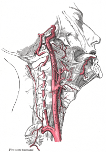 Grays neck arteries